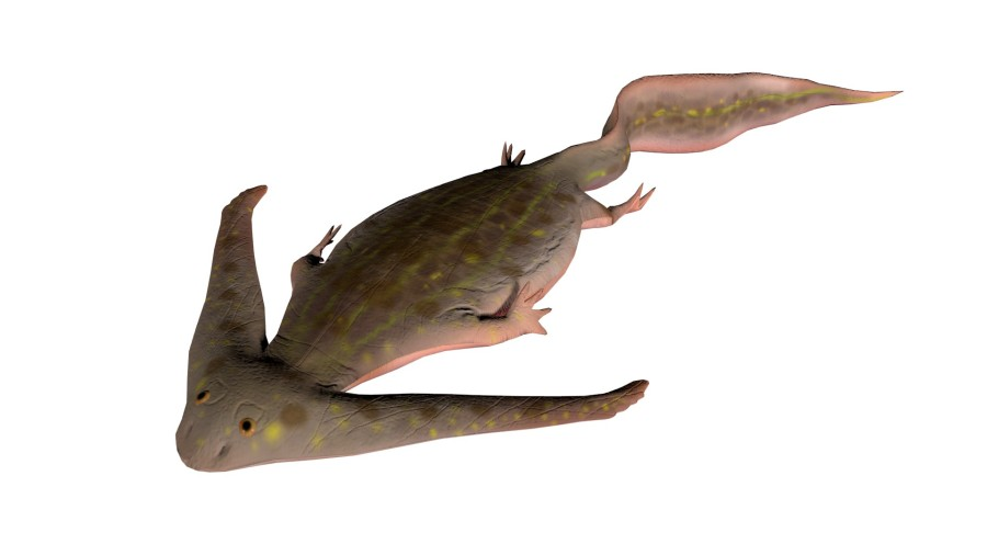 Diploceraspis prehistoric amphibian interactive by Science Planet