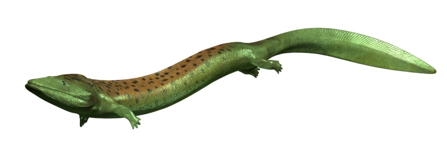 Greererpeton prehistoric amphibian from Science Planet VR interactive experience